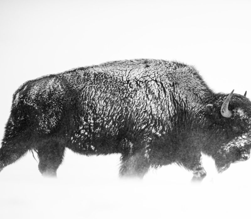 David Yarrow Photography Newsletter Edition 3, March 2017