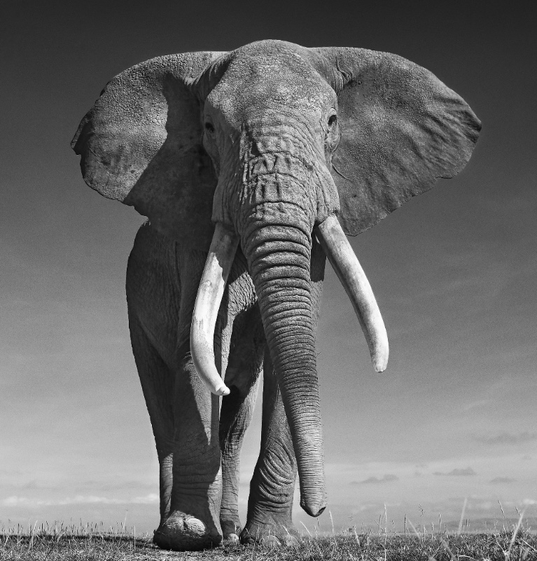 David Yarrow Photography Newsletter Edition 5, May 2017