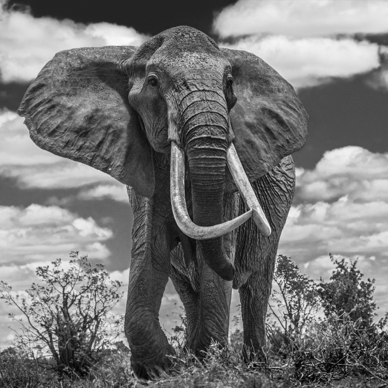Tsavo East – David Yarrow