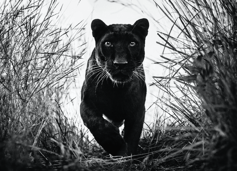 David Yarrow Photography Newsletter Edition 17, July 2018