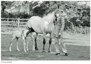 Rod Stewart With Horses
