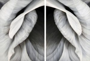 Untitled No. 30 Diptych (Vertical View)