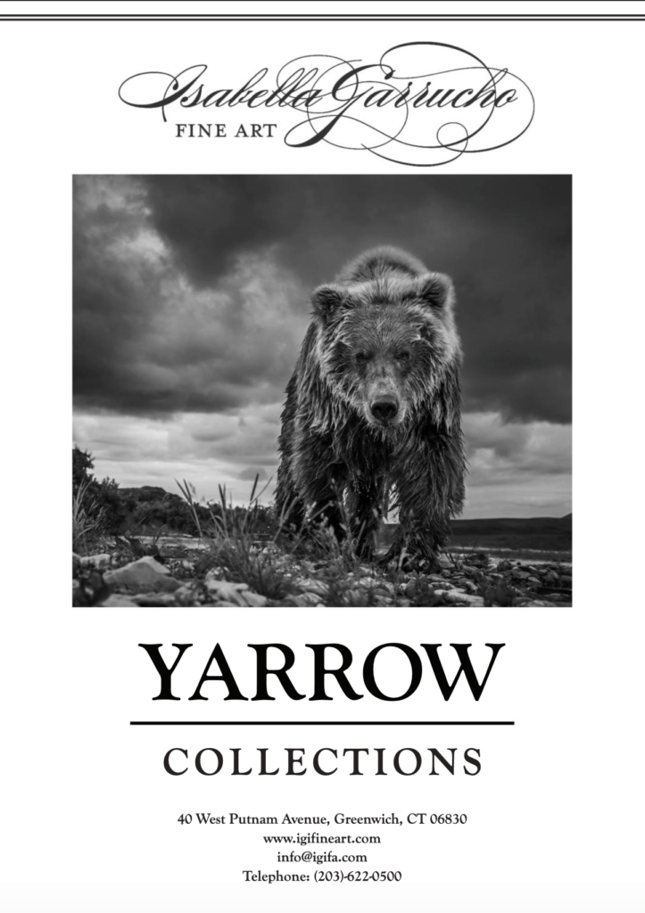 David Yarrow Bears Brochure 2019